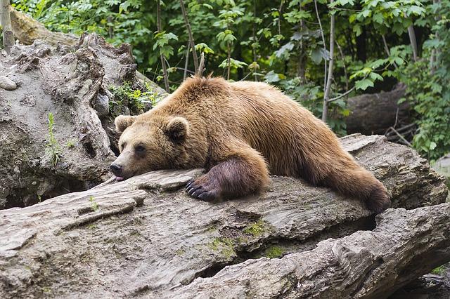 Market Round Up: Bear Market Blues 🐻 Rupee Rocket Ship 🚀