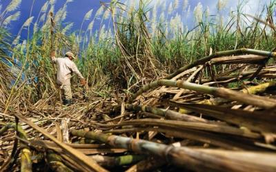 Market Round Up: Indian Sugar Rush😨Singles Day Bonanza🎁